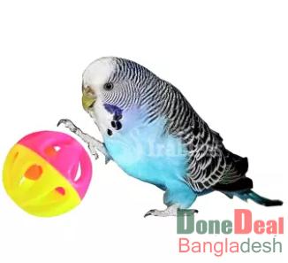 Cockatiel, Parrot, Love Birds Wood Mirror Toy