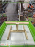 Natural Wooden Bird Playful Climbing Table Stand for Cage Accessory Perch Bird Toy for Budgies, Cock